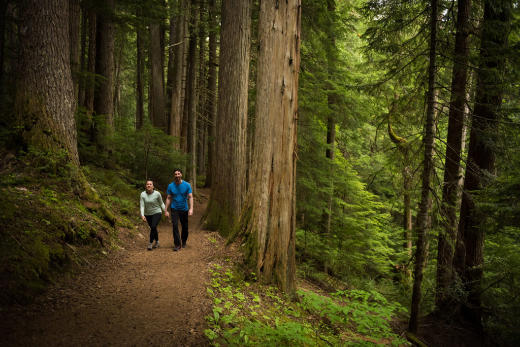 Wander among old growth forests | Five Whistler Hikes For The Whole Family